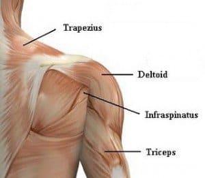 shoulder 300x261 1